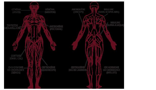 zone corporelle